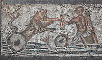Roman mosaic of Amphitryon riding a chariot with a lion behind, detail from below Orpheus surrounded by animals, from the House of Orpheus, Volubilis, Northern Morocco. Volubilis was founded in the 3rd century BC by the Phoenicians and was a Roman settlement from the 1st century AD. Volubilis was a thriving Roman olive growing town until 280 AD and was settled until the 11th century. The buildings were largely destroyed by an earthquake in the 18th century and have since been excavated and partly restored. Volubilis was listed as a UNESCO World Heritage Site in 1997. Picture by Manuel Cohen