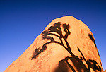 Shadow of a joshua tree on a boulder, Joshua Tree National Park, California, USA