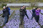 Foto: VidiPhoto<br /> <br /> Voorhout - Engelse vogelbeschermers kijken dinsdag samen met Nederlandse bollenkwekers en vogelkenners naar het rijke vogelleven bij een ge&iuml;nundeerd veld. Het onder water zetten van bollenpercelen om daarmee ziekten en plagen in de bodem te bestrijden, is een vinding van de Nederlandse bloembollensector en wordt al ruim 30 jaar toegepast. Daarnaast heeft deze biologische bestrijding een positief effect op het vogelleven. Bloembollenvelden trekken allerlei vogels aan die het op andere plaatsen in Nederland vaak moeilijk hebben. Typische bollenvogels zijn onder meer de kievit, de scholekster, de veldleeuwerik en de gele kwikstaart. Deze vogels broeden met veel succes tussen de tulpen, narcissen en hyacinten. Het is nauwelijks bekend dat het rijkste vogelgebied van Nederland niet in een natuurgebied ligt, maar in de Bollenstreek. Medewerkers van de Royal Society for the Protection of Birds (RSPB) zijn in Nederland voor &lsquo;inundatieles&rsquo; van bloembollenkwekers. De RSPB bezit in Engeland veel land en verhuurt dat deels aan agrari&euml;rs. Met kennis uit de Nederlandse bloembollensector wordt straks ook in Engeland gewerkt aan duurzaam bodembeheer.
