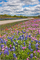 Along Highway 71 near Pontotoc, Texas, in the Texas Hill Country, bluebonnets and other Texas wildflowers line the road.