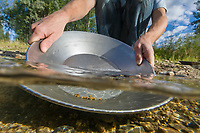 Panning for gold in the crystal clear water of  Monument creek, interior, Alaska.