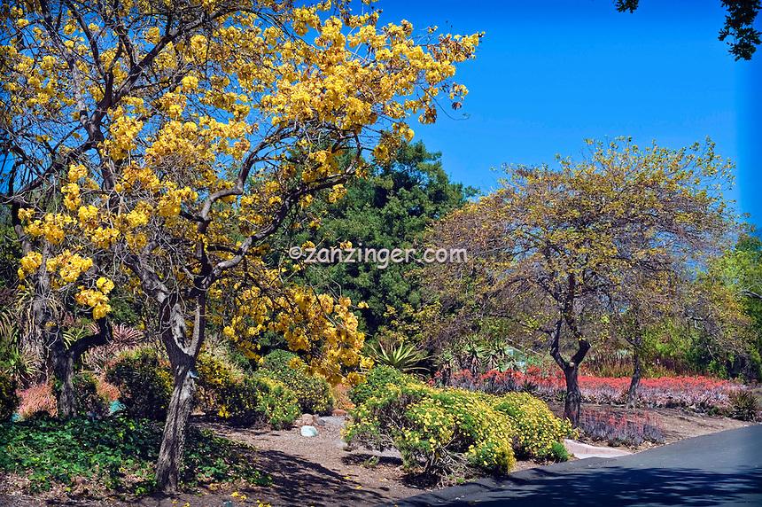 LA County Arboretum - Arboreta and Botanic Gardens in Arcadia, CA