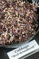Sprouts: Cabbage Red Drumhead