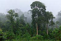 Lowland rainforest at dawn with fog and mist, Danum Valley Conservation Area, Sabah, Borneo, Malaysia