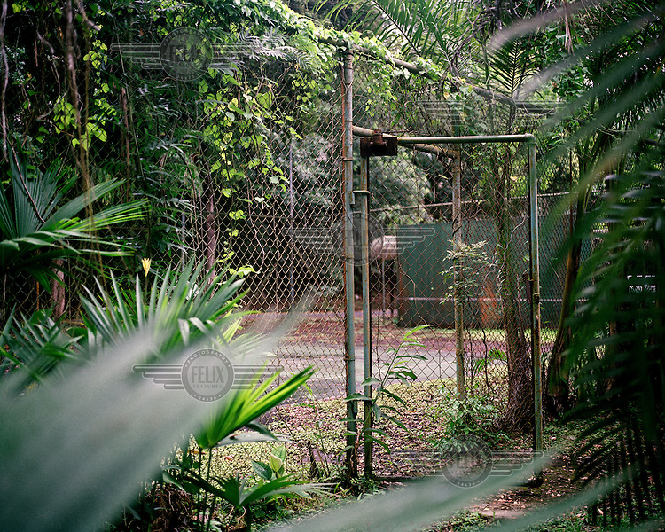 An old, disused basketball court, overgrown by the encroaching jungle, in Quarry Heights in the former Panama Canal Zone. Quarry Heights was the site of an American military base and the nerve centre for all US military forces in Panama from 1915 to 1997. After it returned to Panamanian control, following the 1977 de Torrijos-Carter Treaty, it was turned into a luxury resort complex.  <br /> <br /> The Panama Canal Zone is an area extending 8kms out, in each direction, from the waterway's central line, was a territory controlled by the United States between 1903 and 1979. After a 20 year period of joint administration, the Canal came under the full control of Panama in 1999. The Canal opened to shipping in 1914 and during its tenure was of great strategic importance to the US, enabling it to rapidly move its naval fleet between the Atlantic and Pacific Oceans. However, its economic value came not directly from shipping fees but from the stimulus to trade that the waterway created. One hundred years after it opened in 2014 it is due to have its locks upgraded to cater for the super sized container ships of the 21st Century.  <br /> <br /> During the era of American administration thousands of US citizens populated the Canal Zone, living and working under US law in towns built to American standards. Not all of these people returned north after the canal came under full Panamanian control many stayed on, their identities tied to the region.