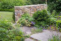 Stone wall dividing lawn grass from garden stone patio, helleborus, Buxus boxwood, Thymus thyme herbs in flower, Salvia, Verbascum