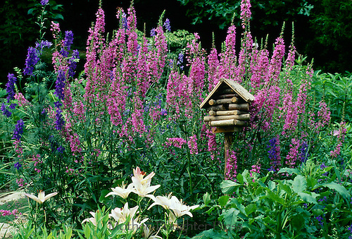 Log cabin hand built birdhouse in blooming garden with lythrum, white lillies, and larkspur, Missouri, USA