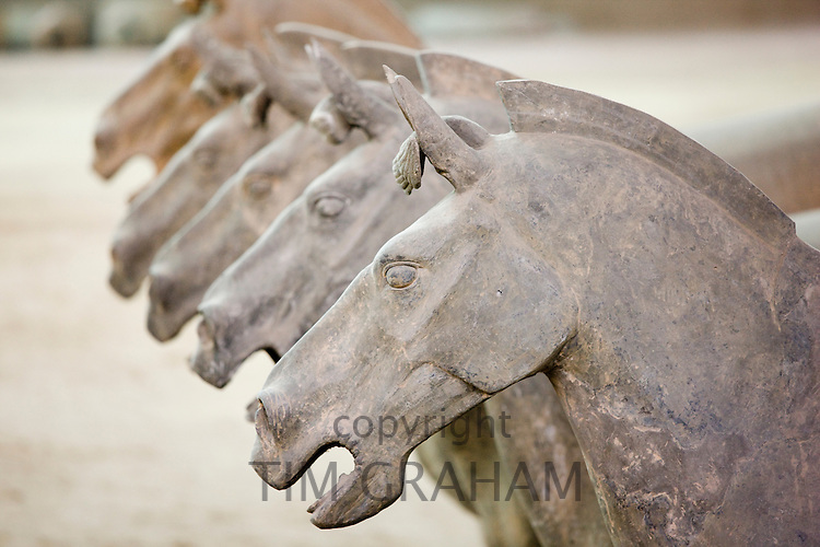 Terracotta horses alongside warriors at Qin Museum, exhibition halls of Terracotta Army, Xian, China