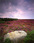 Heather Moorland with boulder in foreground, Yorkshire Moors National Park