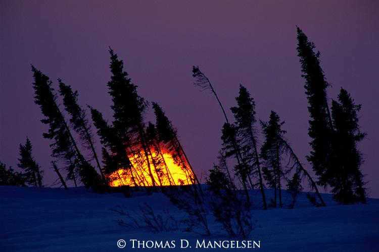 Sun rising behind spruce trees near Hudson Bay, Manitoba, Canada.