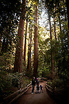 From left, Robert, Tatini, and Ami Montgomerie of Sweden enjoy Muir Woods National Monument, January 26, 2011.