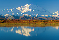 North face of 20, 3020+ ft. Mt. McKinley (locally called Denali) autumn tundra and reflection in tundra pond, Denali National Park, Alaska.