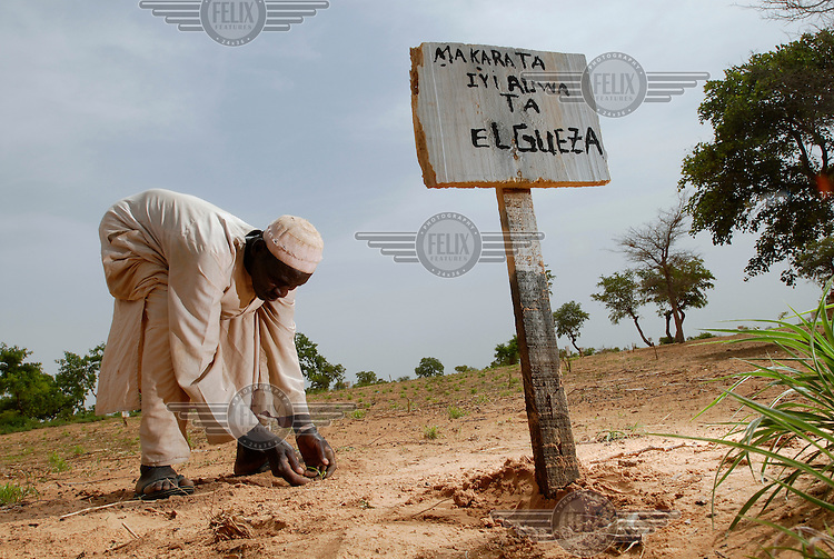 A handmade sign indicates the type of millet seed planted in an IFAD-funded crop trialling programme at El Gueza. The project's aim is to determine which crop varieties are best suited to the dry sub-Saharan Sahel lands of southern Niger.