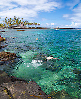 Snorkelers at Two Step on the Big Island of Hawai'i, with the City of Refuge in the background, Honaunau Bay.
