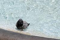 Piccioni.Pigeons. ..