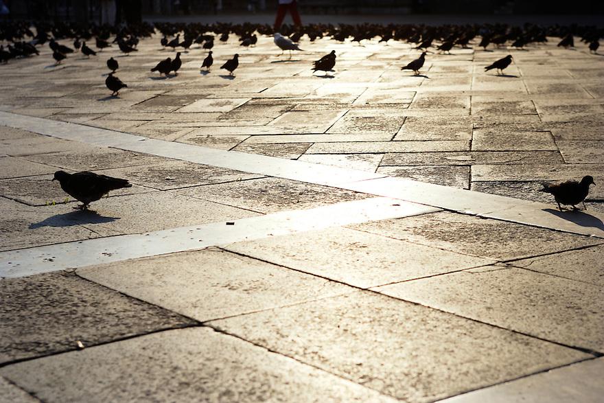 Saint Mark's Square, Venice, Italy - Piazza San Marco, Venezia, Italia