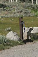 Rivers, Quaking Aspens,Eastern sierra nevada mountains,California,Lee Vining