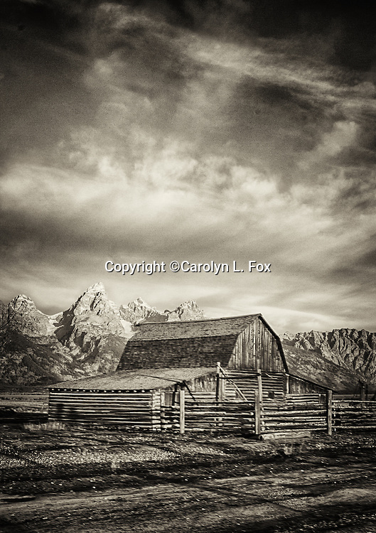 The old, historic barns on Mormon Row in Jackson Hole, Wyoming are popular tourists spots.