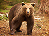 Finland, Martinselkonen.<br />