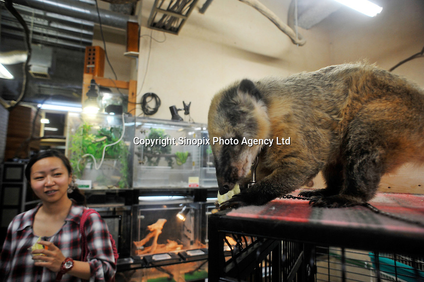 A Lesser Anteater for sale at the world's most exotic pet shop called the 'Noah Inner City Zoo'. The rare and endangered animal sells for 480,000 yen (5300 US$). The Noah Inner City Zoo is a pet shop that sells exotic animals. The 'zoo' claims to have more than 300 species for sale, many of which are rare and some are endangered.