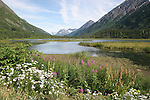 Wetland on Kenai Peninsula in July