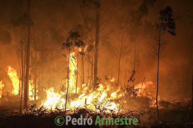 Trees burn during the wildfire in Riveira, near A Coruña on August 28, 2013. © Pedro ARMESTRE