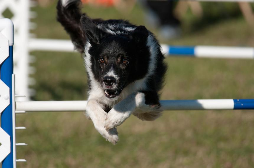 Dog Show Sampson State Park
