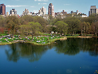 Central Park Reflection