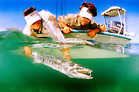 great barracuda, .Sphyraena barracuda, .Stiltsville, Biscayne National Park, .Florida (Atlantic).
