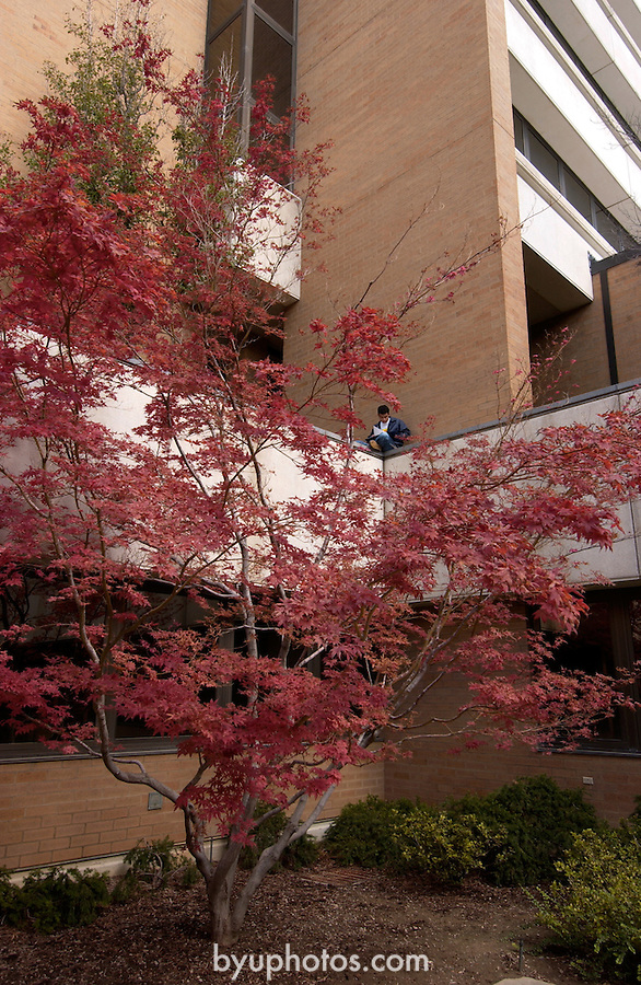 September General Campus Scenics (GCS).Sep 2004..Photo by Mark Philbrick/BYU.Spencer W. Kimball Tower (SWKT) gardens, Fall leaves.