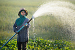 Vann Monthy, 18, waters a vegetable field in the Cambodian village of Talom.