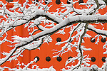 Please call 888-973-0011 or email info@artwolfe.com to license this image. <br />