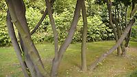 sculptural tree trunks, Villa Carlotta, Tremezzo, Italy