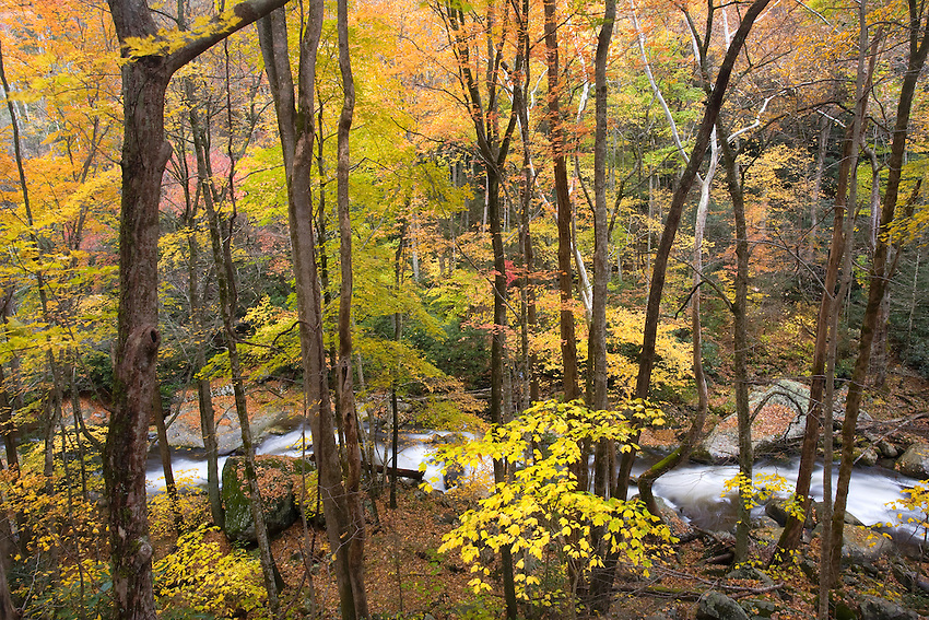 """""""BIG CREEK AUTUMN"""" - Fall color along Big Creek in the northern part of Great Smoky Mountains National Park. This view was captured via a large cliff band that allowed a more aerial view."""