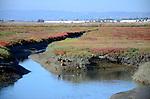 Ducks at Hayward Regional Shoreline