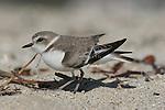 Santa Cruz Birds. 2009 Edit