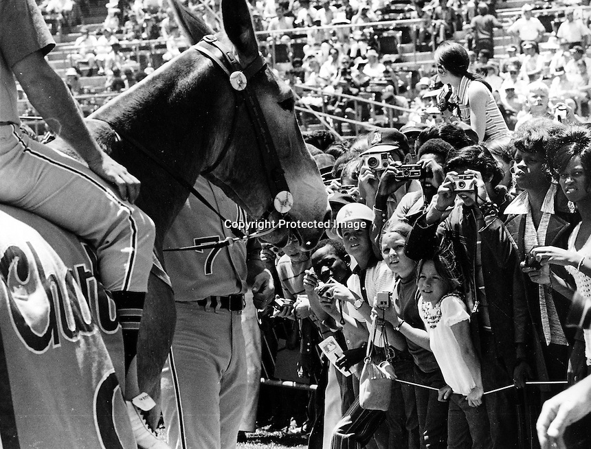 A's mascot Charlie O, the mule....photo/Ron Riesterer