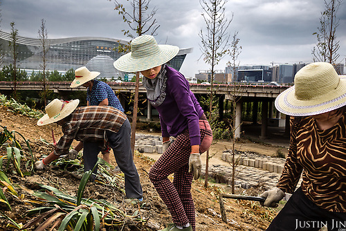 Former subsistence farmers plant flowers in a park built over their farmland in front of a new exhibition centre in southwestern China.<br /> <br /> The local government is razing villages and farmland on the outskirts of the city to make way for urban development. <br /> <br /> These women each earn around 1,000 yuan per month landscaping the city, an improvement over subsistence farming.