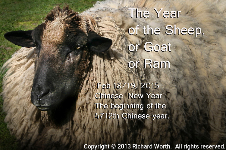 Depending on your time zone, Feb. 18 or 19, 2015 marks the beginning of the Chinese New Year - the year of the Sheep.  Year 4,712.