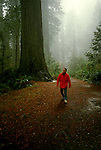 California: Redwood Country.  Hiking in Redwood National Park..Photo copyright Lee Foster, 510/549-2202, lee@fostertravel.com, www.fostertravel.com..Photo #: caredw105