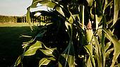 South West Kansas, USA, August 2011:.Genetically modified corn field monoculture. Landscape has changed dramatically in some parts of this previously Cheyenne territory..(Photo by Piotr Malecki / Napo Images)..Pd-Zach Kansas, Stany Zjednoczone, Sierpien 2011:.Pole genetycznie modyfikowanej kukurydzy. Krajobraz zmienil sie bardzo w niektorych czesciach tego wczesniejszego terytorium Szejenow..Fot: Piotr Malecki / Napo Images.