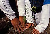 children planting koa with hands