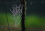 Morning dew covered a spider's web with droplets on Oct. 14th on Little Buckhorn road outside of the Robinson Forest Camp. .Photo by Sam Verbulecz