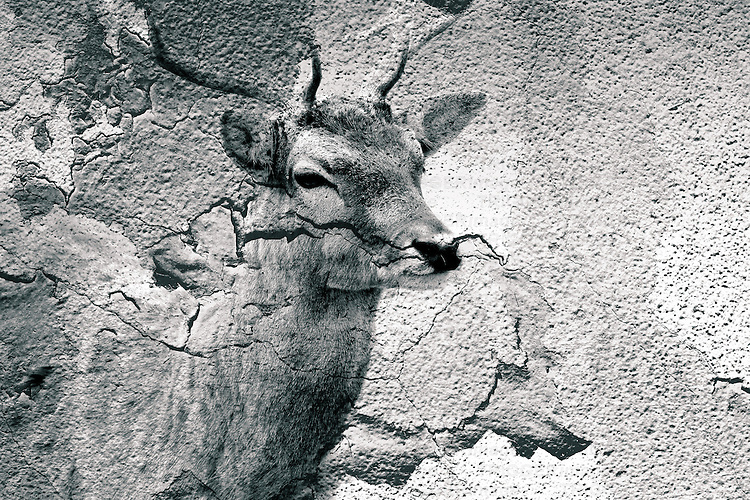 The body of a red deer merges with the textures and structures of a wall.