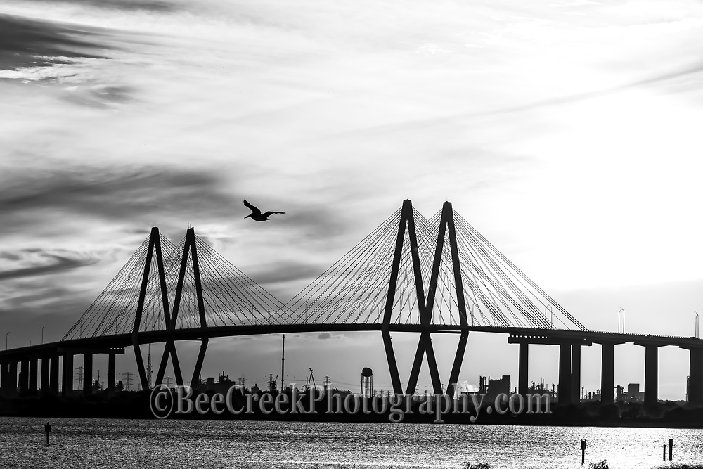 We like this catch of this pelican as it flew in front of the Fred Hartman Bridge in Baytown along the ship channel outside of Houston Texas in black and white. Watermarks will not appear on image.