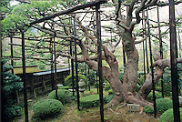The Jikko-in in Ohara features a six hundred year old pine tree shaped like Mount Fuji.