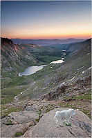 I arrived early to photograph sunrise from Mount Evans, one of Colorado's 14,000 feet mountains. I was surprised to find I could include a mountain goat in some of my landscape images, and I gladly accepted the opportunity. He did approach me and rooted through my backpack. I just kept my distance!
