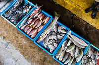 Wide variety of fish (red snappers, bluegills,…) is seen for sale at the seafood and fish market in Veracruz, Mexico, 29 June 2015.