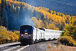 Against a backdrop of golden Aspen trees, Amtrak's eastbound California Zephyr rolls through Tolland, CO, just east of the Moffat Tunnel.