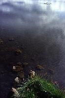 ISLANDA: un lago con degli uccelli acquatici. Sulla superficie si riflette il cielo.